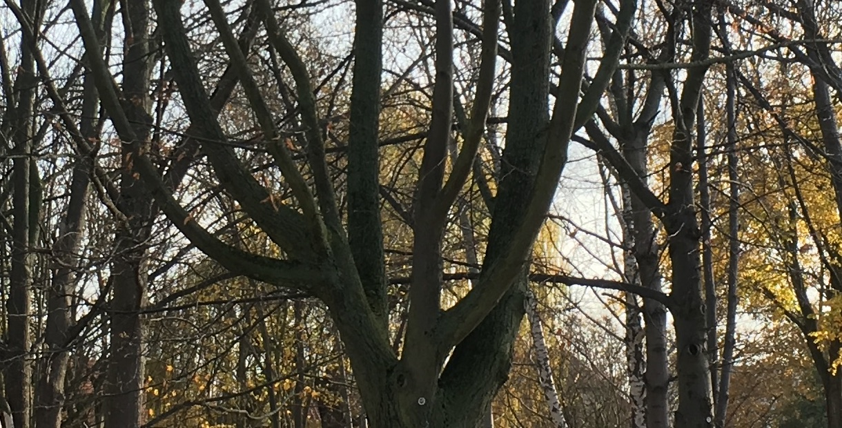 """""""thestreettree"""", Foto von Thomas Tursics (Ausschnitt), CC-0"""