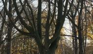 Foto von verschiedenen Berliner Stadtbäumen